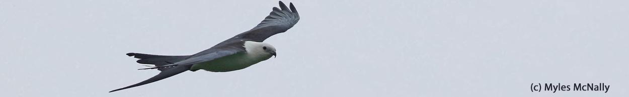 Michigan Bird Records Committee